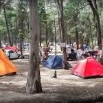 Acampando Camping Bosque Encantado Pehuen Co Buenos Aires