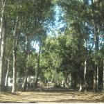 Bosque Encantado Pehuen Co Buenos Aires