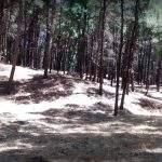 Encantado Camping Bosque Pehuen Co Buenos Aires