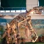 Fosil Megaterio Pehuenco