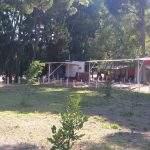Foto Dentro Camping Ate En Pehuen Co Buenos Aires