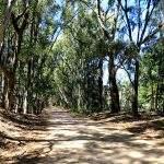 Fotos Bosque Encantado Pehuenco