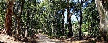 Bosque encantadode Pehuen Có