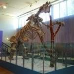 Huesos Megaterium