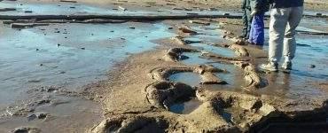 YacimientosPaleontológicos en Pehuen Có
